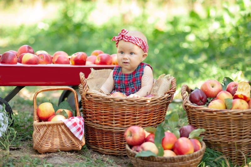 Девушка с Яблоком в яблоневом саде Красивая девушка есть органическое Яблоко в саде Принципиальная схема хлебоуборки Сад, еда мал стоковая фотография rf