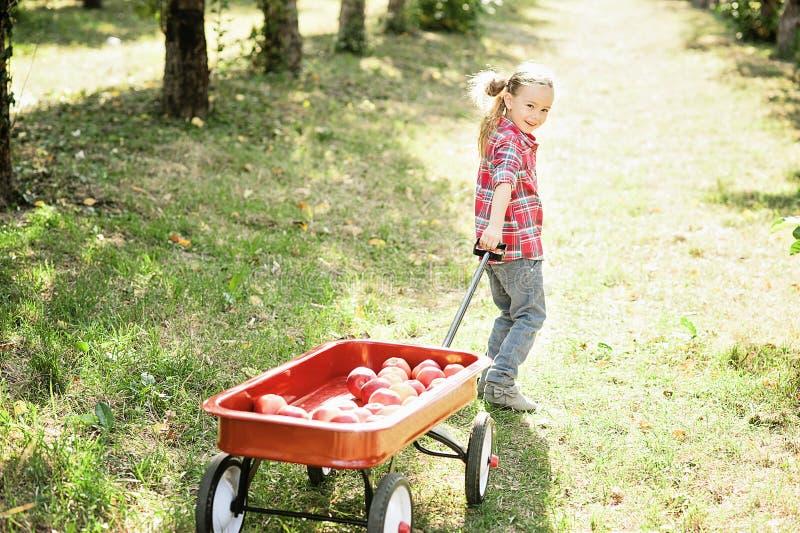 Девушка с Яблоком в яблоневом саде стоковые изображения rf