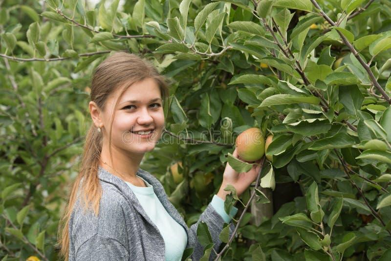 Девушка с яблоками стоковое фото rf