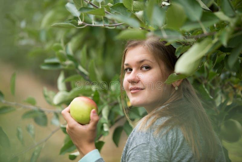 Девушка с яблоками стоковые изображения rf