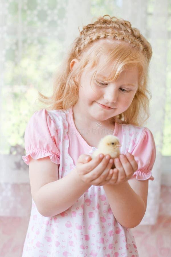 девушка цыпленка немногая стоковые фотографии rf