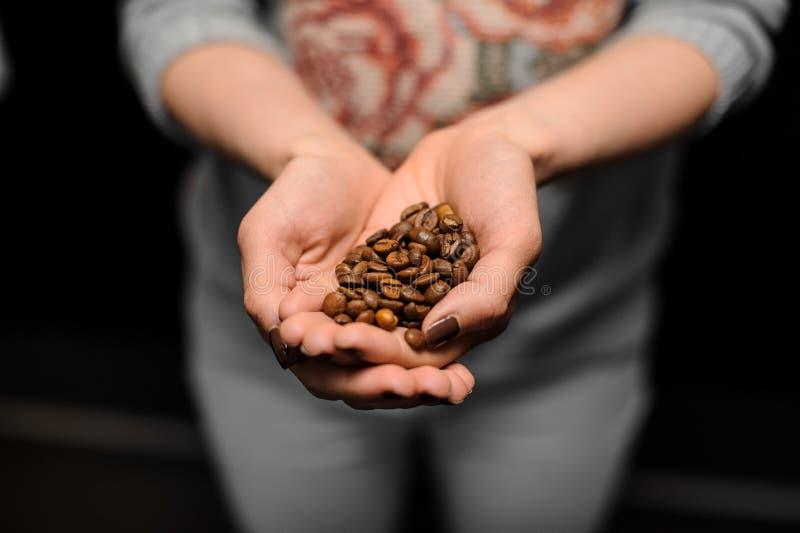 Девушка Barista держа в ее руках малая пригорошня зерен кофе стоковое изображение
