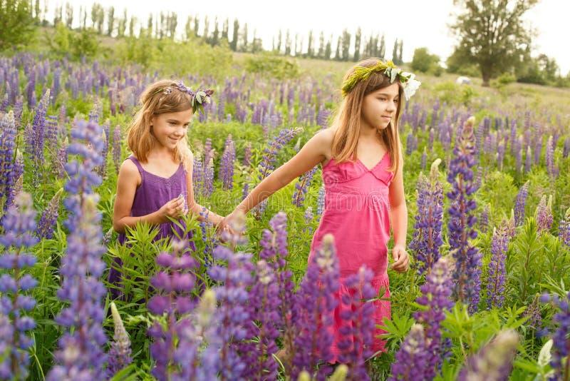Девушки идя в поле lupine в вечере, руки удерживания стоковая фотография rf