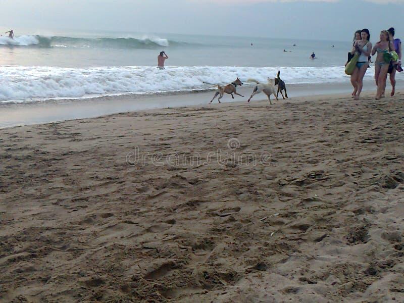 Девушки и их собаки на пляже стоковое фото rf