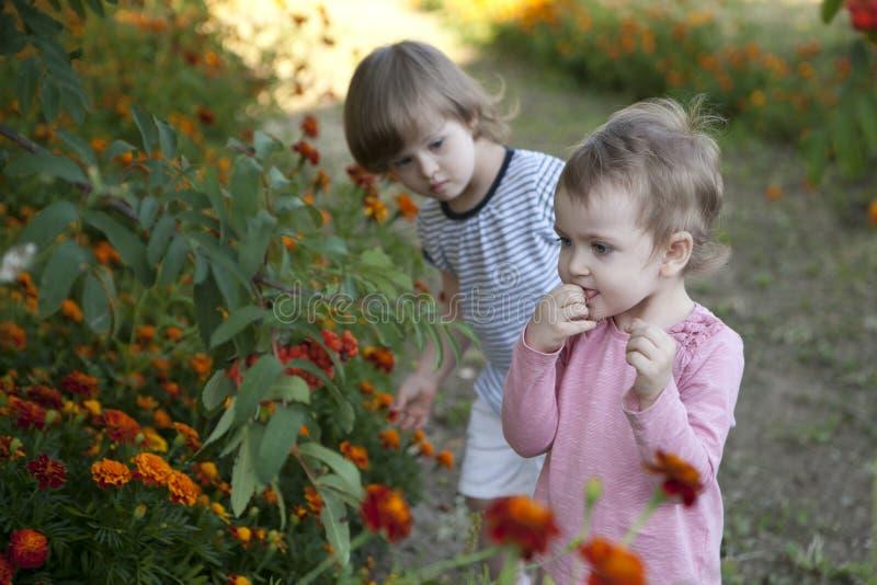 2 девушки пробуют горькие ягоды дерева золы горы стоковое фото rf