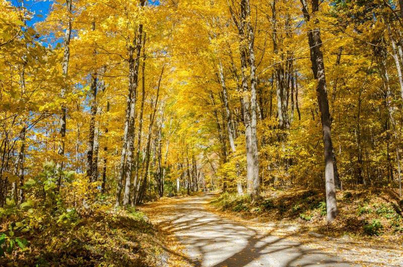 Дезертированная назад дорога через золотой лес в осени стоковое фото rf