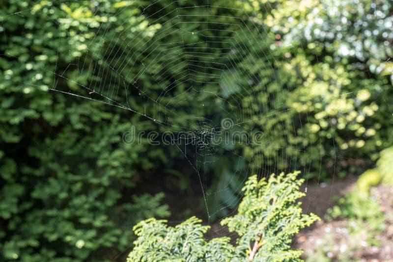 Дезертированная сеть паука в солнечном свете стоковая фотография