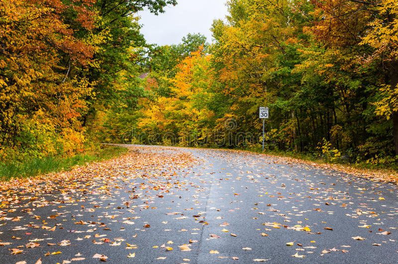 Дезертированный изгибающ дорогу леса в осени стоковые изображения rf