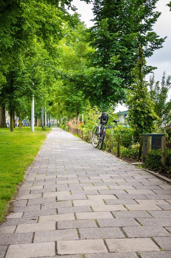 Дезертированный каменный путь выровнянный с деревьями стоковое фото rf