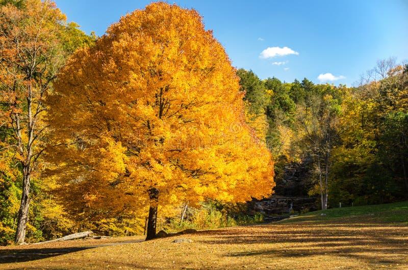 Дезертированный парк в осени стоковые фотографии rf