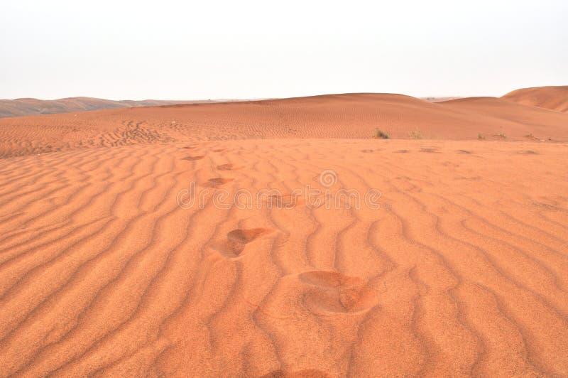 дезертирует UAE стоковые фотографии rf