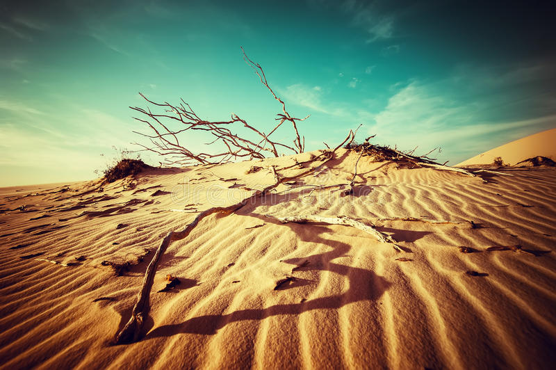 Дезертируйте ландшафт с мертвыми заводами в песчанных дюнах под солнечным небом стоковое фото