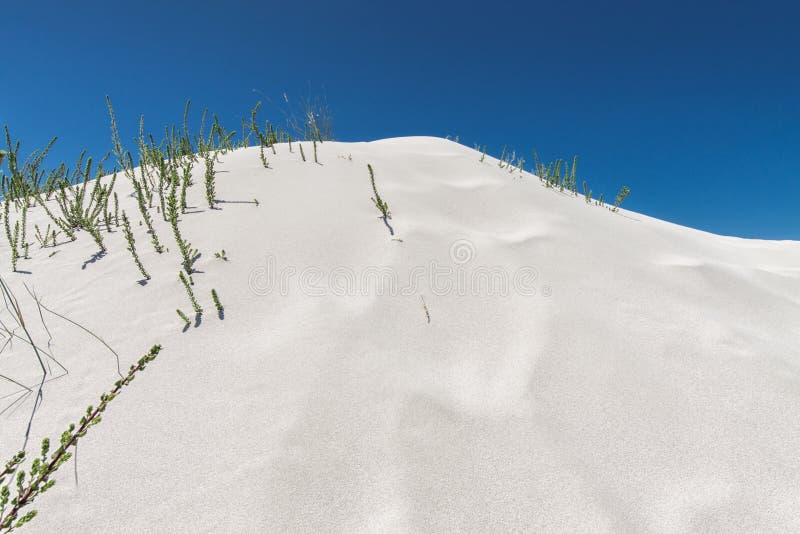 Дезертируйте предпосылку с белой песчанной дюной и голубым небом стоковое фото rf