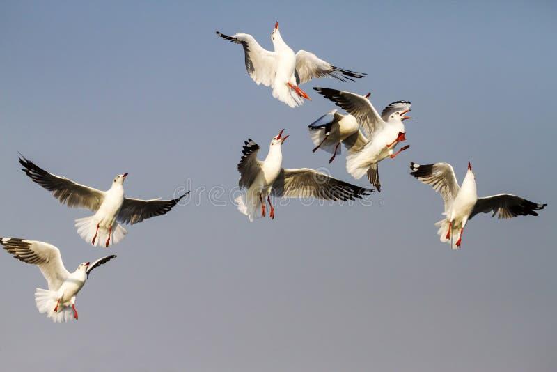 Действие выставки чайки стоковые изображения rf