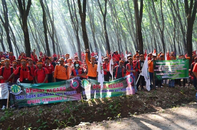 Действие дерева стоковое фото rf