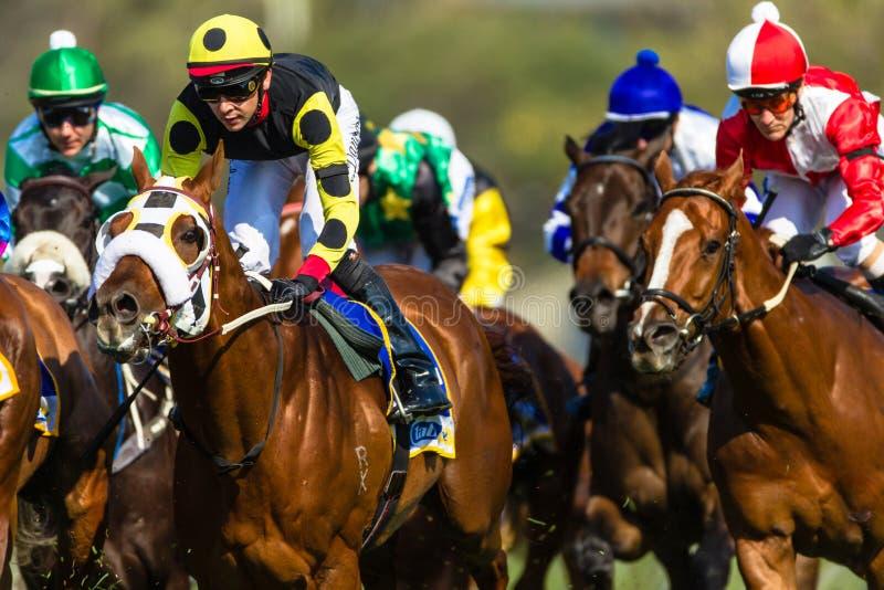Действие жокеев лошадиных скачек стоковое фото