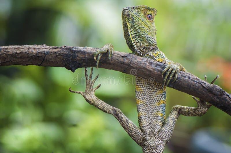 Действие и представление леса дракона смешное стоковое фото rf