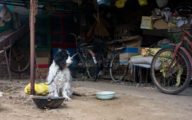 Действительность собаки в пригородном, Китай стоковая фотография rf