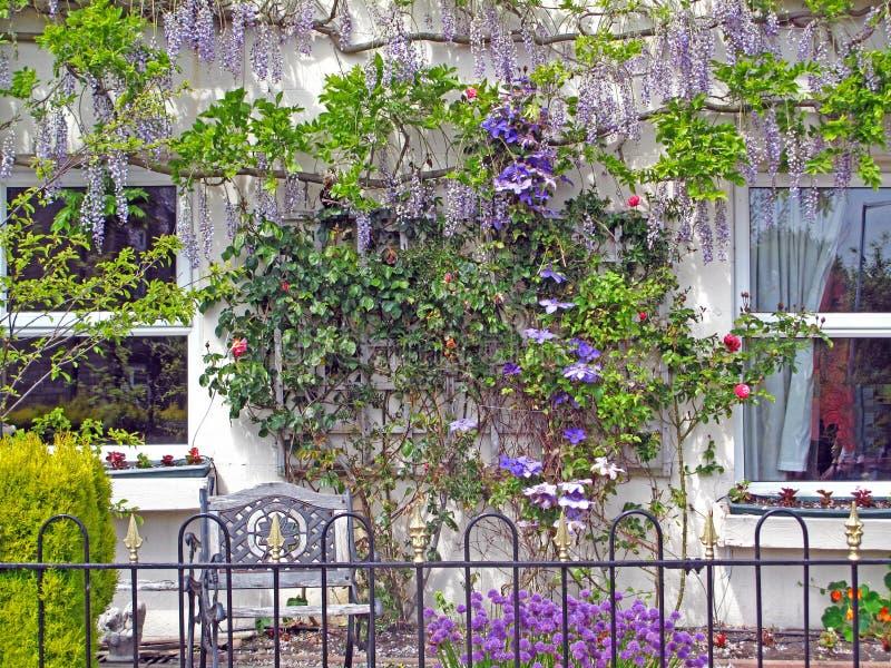 Декоративная цветя стена лозы стоковое фото rf