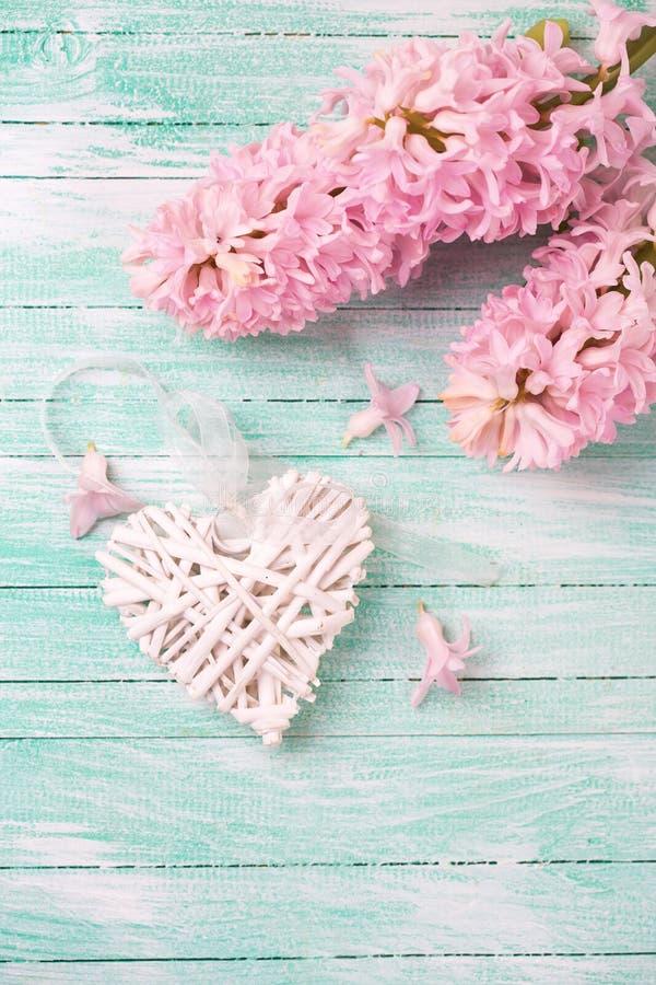 Декоративное белое сердце и розовые гиацинты на бирюзе деревянном b стоковые изображения