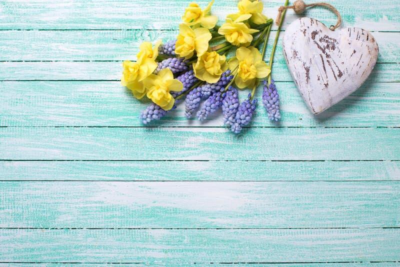 Декоративное сердце и свежая желтая и голубая весна цветут на tu стоковая фотография