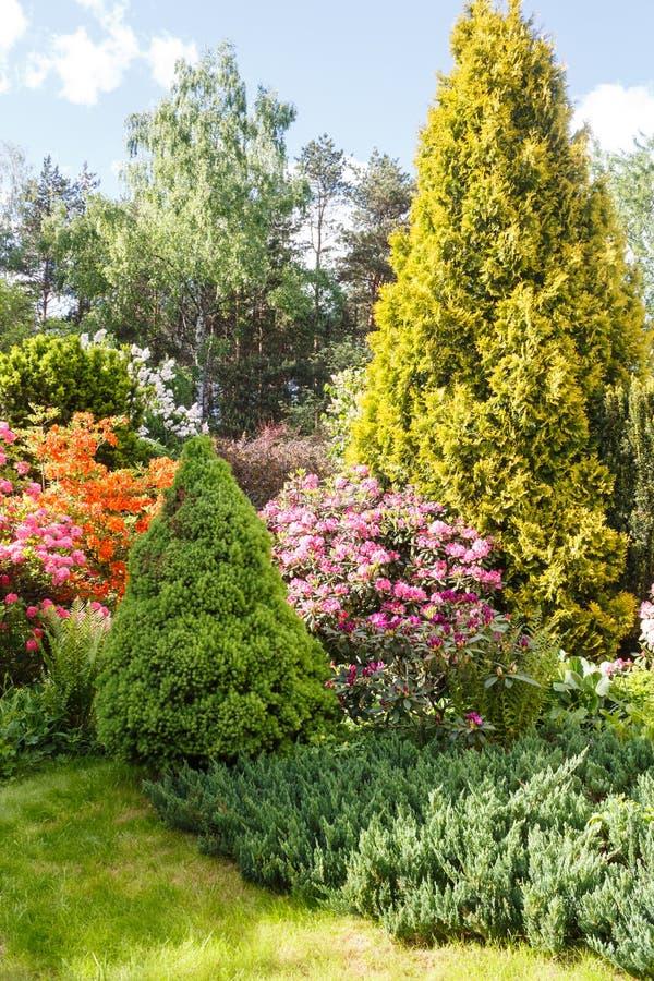 декоративные валы кустарники и цветки в саде: спрус, arborvitae, сосна, ель, можжевельник, рододендрон стоковая фотография rf