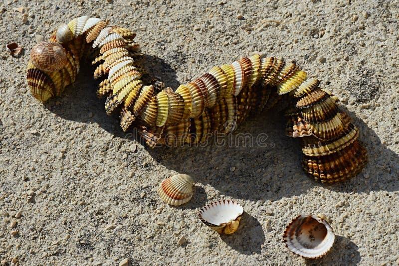 Декоративные змейка или дракон сделанные seashells clam наяды двустворки помещенных на конкретном molo пляжа стоковые фото