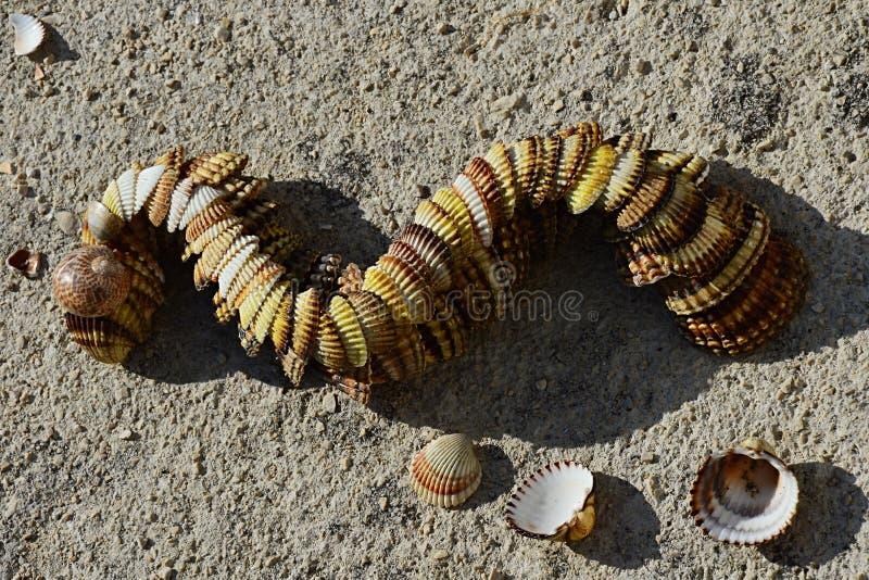 Декоративные змейка или дракон сделанные seashells clam наяды двустворки помещенных на конкретном molo пляжа стоковое изображение