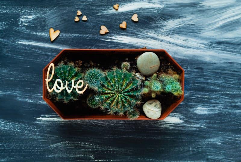 Декоративные кактусы на голубой предпосылке с малыми деревянными сердцами, взгляд сверху, пустом пространстве для текста стоковые изображения rf