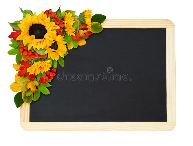 Декоративные солнцецветы и ягоды рябины в красивом расположении угла осени с черной доской стоковые фото