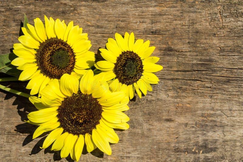 Декоративные солнцецветы на деревянной предпосылке стоковые фотографии rf