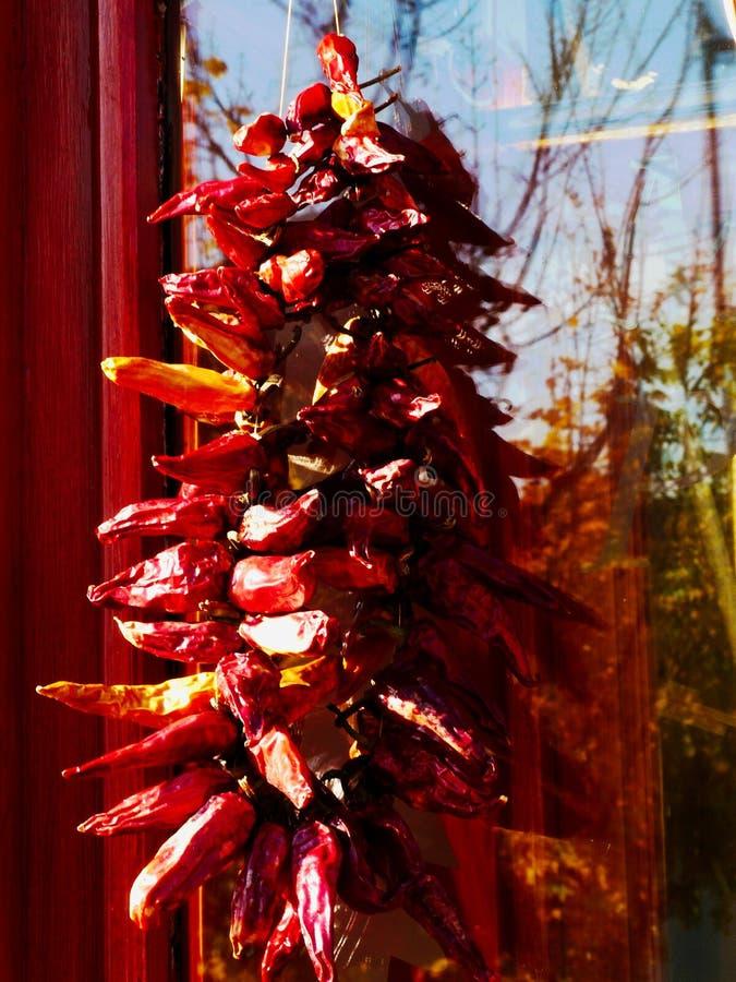 Декоративные сухие красные перцы на строке стоковые изображения