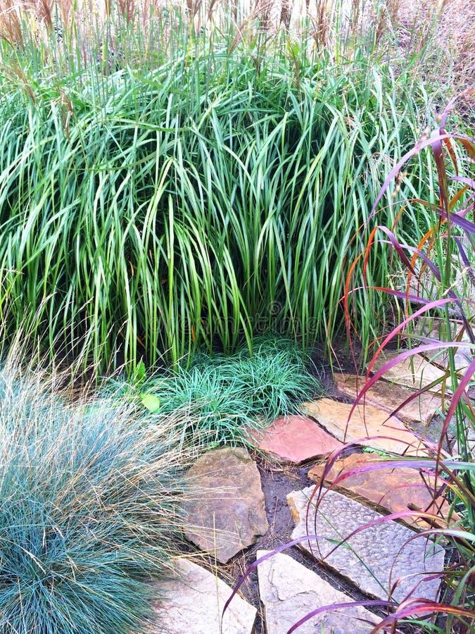 Декоративные трава и путь камня в саде стоковые изображения