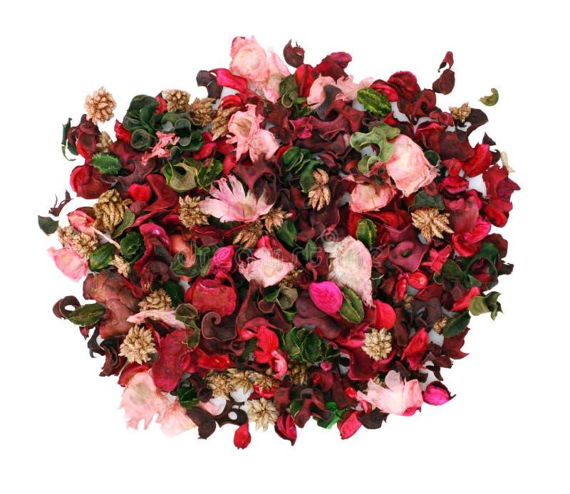 декоративные цветки белые стоковая фотография
