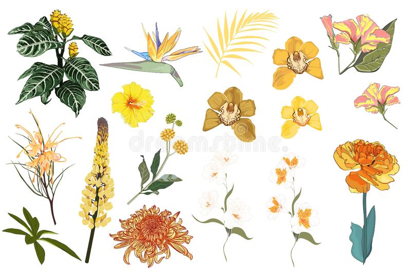 декоративные элементы флористические много установили E Концепция свадьбы с цветками иллюстрация штока