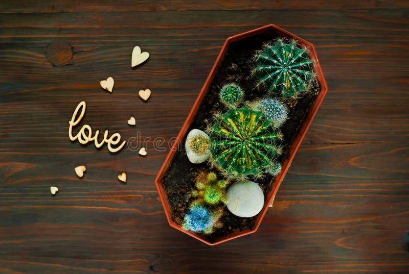 Декоративный покрашенный кактус на деревянной предпосылке с малыми деревянными сердцами, взгляд сверху, пустом пространстве для т стоковое изображение