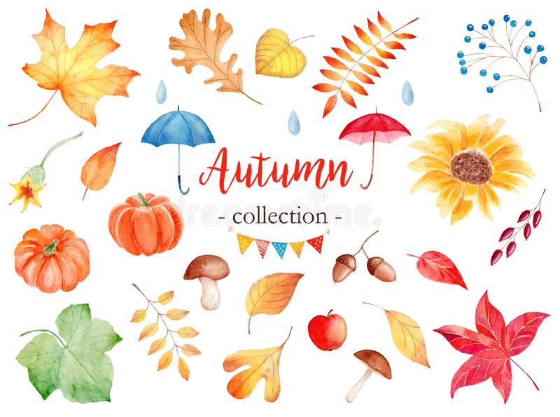Декоративный сезон осени приписывает набор иллюстраций растра акварели стоковая фотография