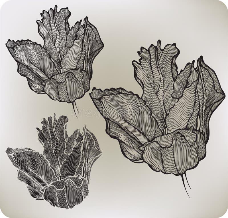 Тюльпан чертеж