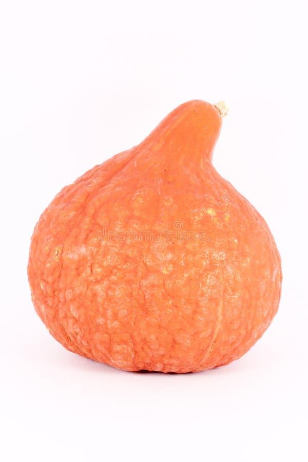 декоративный gourd стоковое фото rf