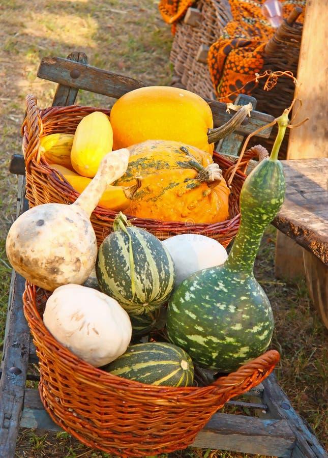 декоративный gourd стоковые изображения