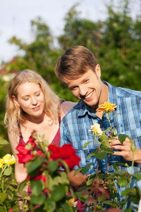 делать работу роз сада садовничая стоковое фото