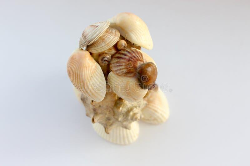 Делают малую собаку раковин моря стоковое изображение