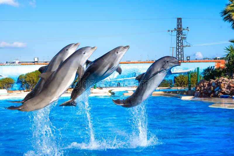 Дельфины на зоопарке Attica паркуют, Афины, Греция стоковая фотография