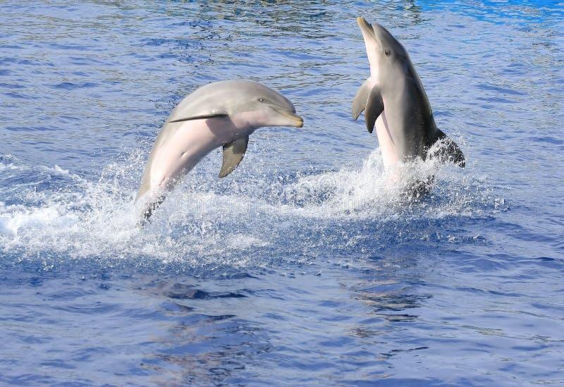 Download дельфины стоковое изображение. изображение насчитывающей млекопитающие - 6850883