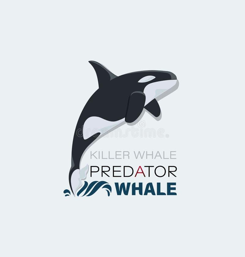 Дельфин-касатка Морской хищник бесплатная иллюстрация