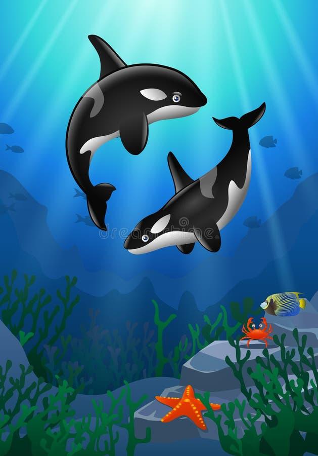 Дельфин-касатка шаржа с кораллом иллюстрация штока