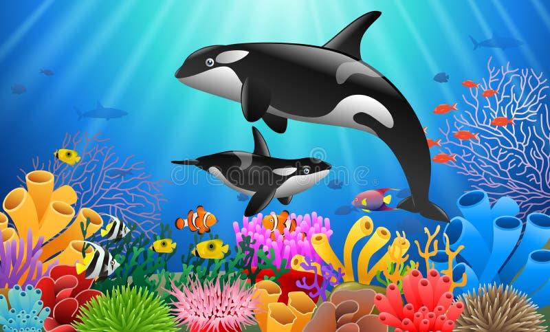 Дельфин-касатка шаржа иллюстрация штока