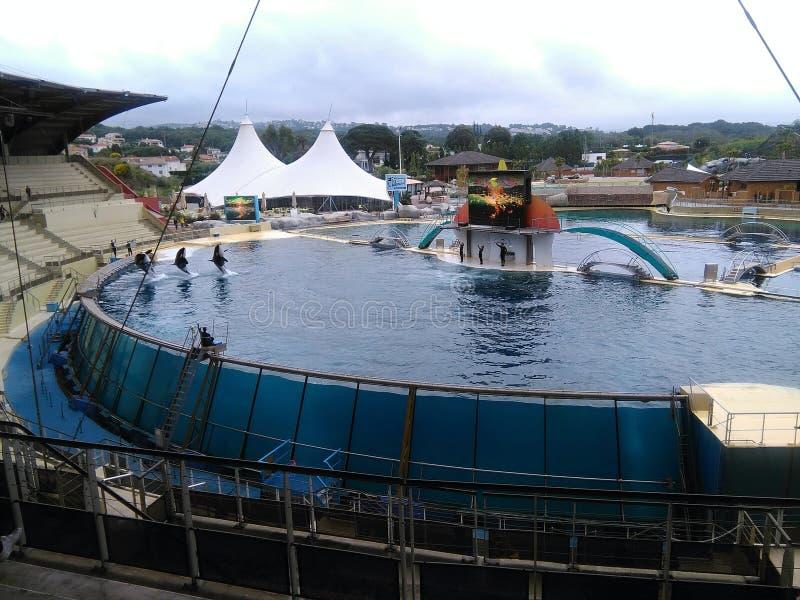 Дельфин-касатки в Marineland Антибе стоковая фотография