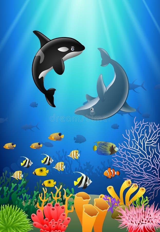 Дельфин-касатки и шарж дельфина с подводным взглядом иллюстрация штока