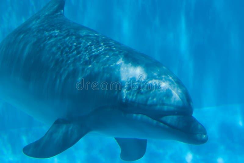 дельфин подводный стоковое изображение rf